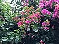 Flower in Kupandole.jpeg