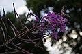 Flowers (9411290872).jpg