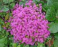 Flowers in Freda's Garden (27361822052).jpg