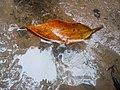 Folha da cor do outono.jpg
