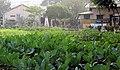 Food Program NDC Dhaka by Mayeenul Islam.jpg