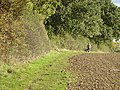 Footpath alongside Ploughman Wood - geograph.org.uk - 1013604.jpg