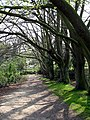 Footpath into Kenwood - geograph.org.uk - 401267.jpg