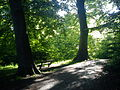 Forår i skoven 1.JPG