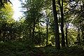 Forêt de Stambruges 19.jpg