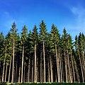 Forest (215169625).jpeg