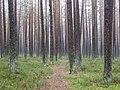 Forest - panoramio (32).jpg