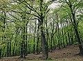 Forest Lenkoran.jpg