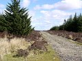 Forest Track - geograph.org.uk - 764324.jpg