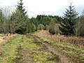 Forest Track in the Galloway Forest - geograph.org.uk - 1362453.jpg