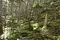 Forest in Akaishi 18.jpg