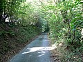 Forest road - geograph.org.uk - 553942.jpg