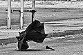 Forgotten umbrella.jpg