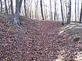 Fort Mill Ridge Civil War Trenches Romney WV 2008 10 30 12.JPG