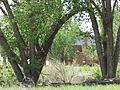 Foster House through trees.jpg
