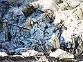Fox Glacier NZ (10) (8400092002).jpg