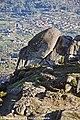 Fraga da Pena - Queiriz- Portugal (9145846011).jpg