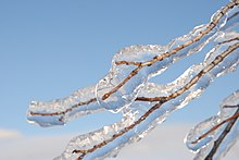 Freezing Rain on Tree Branch.jpg
