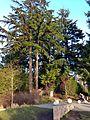 Fremont Peak Park.JPG