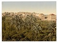 From the garden, Jaffa, Holy Land, (i.e. Israel)-LCCN2002724991.tif