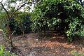 Fruits Garden - Prayas Green World Resort - Sargachi - Murshidabad 2014-11-29 0205.JPG