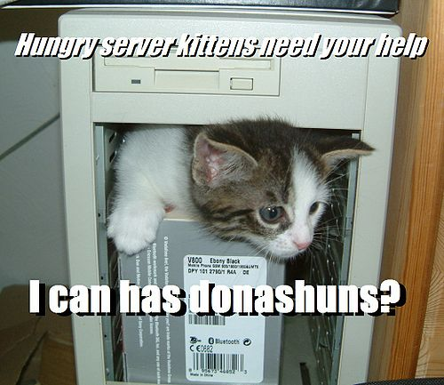 Fundraiser-kitten-1.jpg