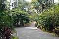 Garden - Agri-Horticultural Society of India - Alipore - Kolkata 2013-01-05 2230.JPG