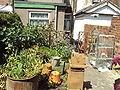 Garden and chimney pot - DSC06793.JPG