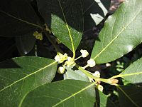 Gardenology-IMG 4930 hunt10mar