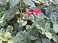 Gardenology.org-IMG 0412 rbgs10dec.jpg