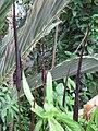 Gardenology.org-IMG 1737 hunt09oct.jpg