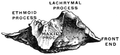 Gerrish's Text-book of Anatomy (1902) - Fig. 228.png