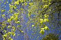 Give me the blues of summer (4610562987).jpg