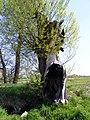 Gliwice, Sikornik - panoramio - stone40 (3).jpg