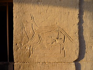 Graffiti - Ancient graffito at Kom Ombo Temple, Egypt