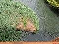 Grande seca de 2014, ponte do Rio Pardo entre Pontal e Cândia (distrito de Pontal). Em outubro de 2014, o Rio Pardo registrou em Ribeirão Preto a marca de 34 centímetros de profundidade, atingindo o - panoramio (3).jpg