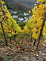Grape vines above Beilstein.jpg