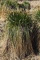 Grassbüschel 3.jpg