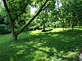 Green by the Creek - panoramio.jpg
