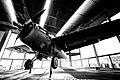 Grumman F4F-3 Wildcat - Butch O'Hare White F-15 Replica at ORD.jpg