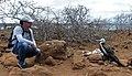 Guillem Chacon con polluelo de Fragata en las Islas Galápagos.jpg