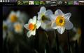 Gwenview fullscreen.png