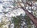 HK CWB 銅鑼灣 Causeway Bay 維多利亞公園 Victoria Park tree trunk n green leaves December 2019 SSG 02.jpg