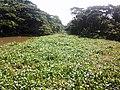 Habibpur Switch Gate - panoramio.jpg