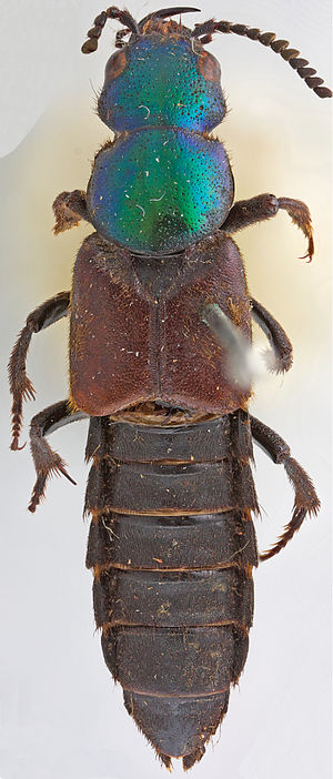 Commemoration of Charles Darwin - The holotype of Darwinilus sedarisi, published on Darwin's 205th birthday