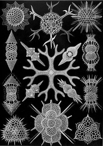 Polycystine - An illustration of polycystines of the subclass Spumellaria, from Ernst Haeckel's 1904 Kunstformen der Natur (Artforms of Nature)