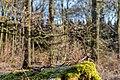 Haltern am See, Naturpark Hohe Mark -- 2018 -- 1311.jpg