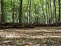 Hambach forest 40.jpg