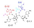 Hammerhead ribozyme mechanism.png