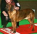 Hanoverian Scenthound.jpg